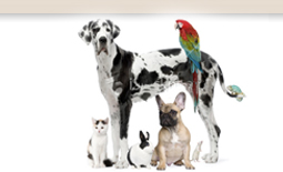 Western Canada Pet Supply Distributor